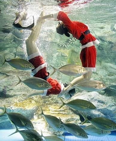 Buon Natale a tutti i surfcaster!