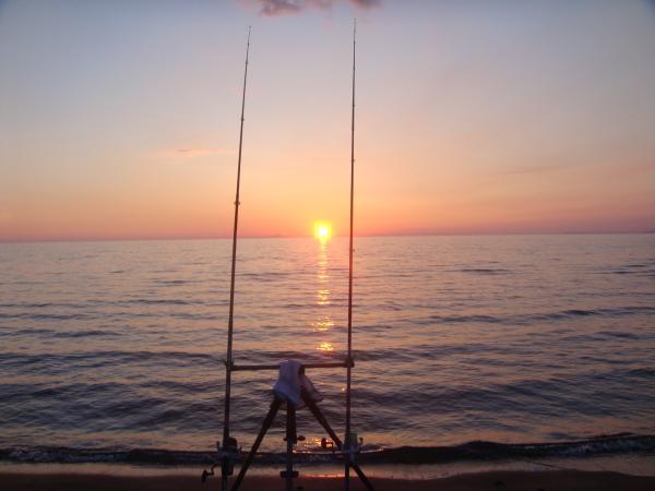 Come capire il mare: il pascolo dei pesci