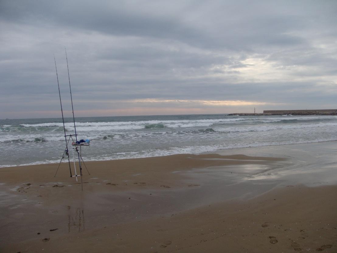 Surfcasting: Come pescare la spigola a Febbraio?