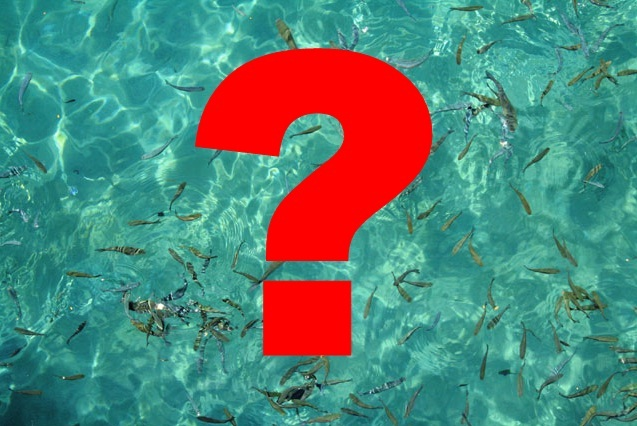 Indovinello: Che pesce è?