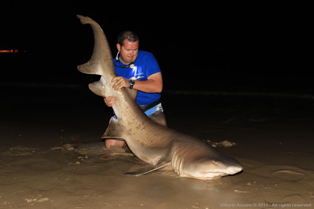 Shark fishing vs Vittorio Azzano