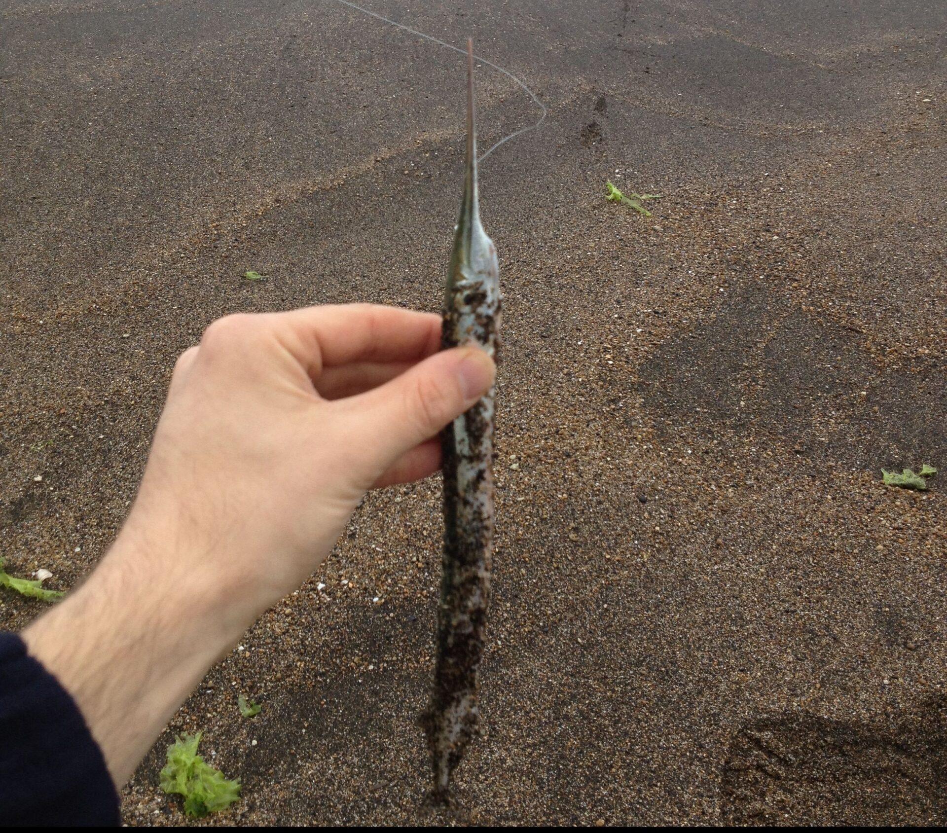 PAF: Campo di Mare e i suoi granchi