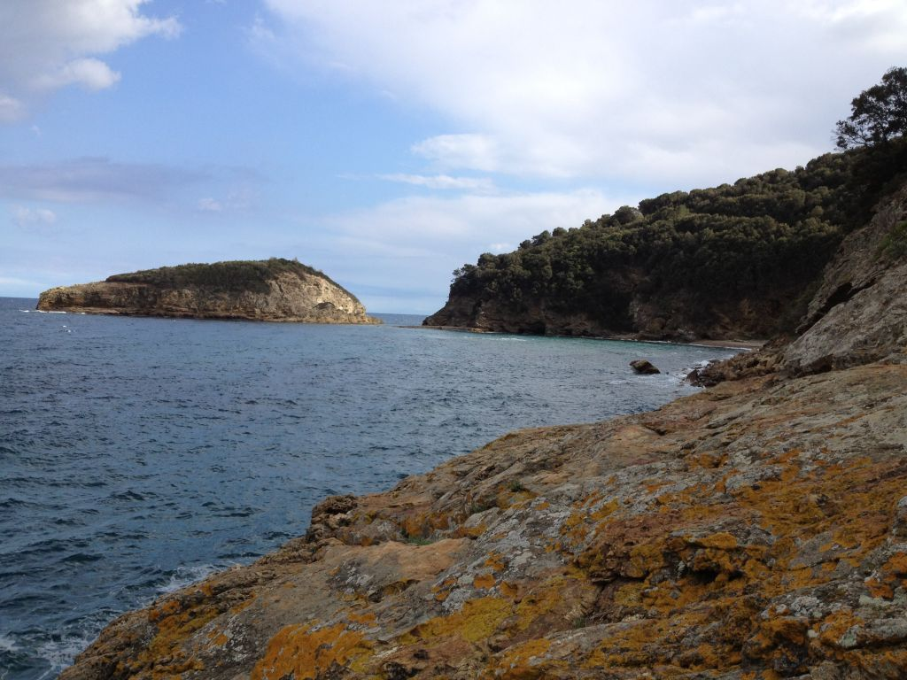 Paf isola d'Elba