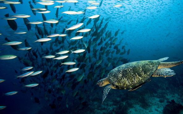 Surfcasting blog - meraviglie del mare 10