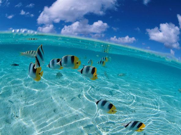 Surfcasting blog - meraviglie del mare 11