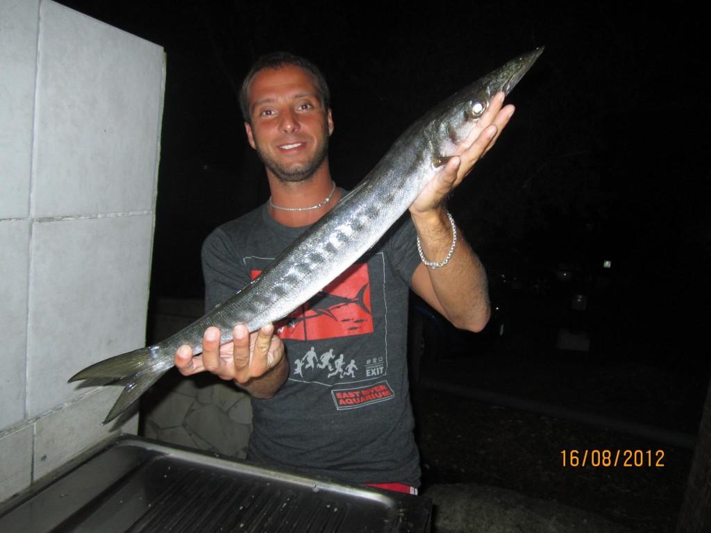 Barracuda catturato a surfcasting