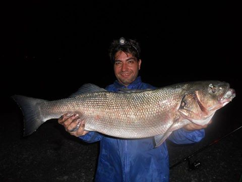 Surfcasting Messina: Super Spigola da 7,2 kg!