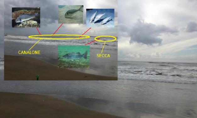 Le tre fasi della mareggiata – Pesci fantastici, dove trovarli